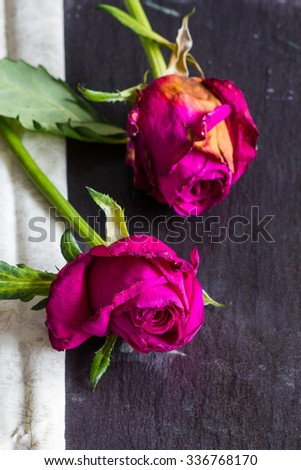 Two wilted pink, red roses with fabric on slate background. Copyspace, closeup, selective focus, vertical - stock photo
