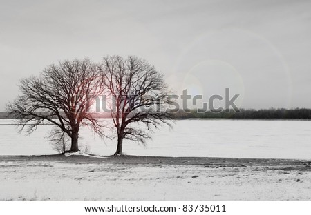 Two winter trees with warm light in between them