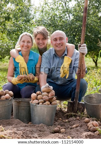 Two women and man harvesting potatoes in field - stock photo