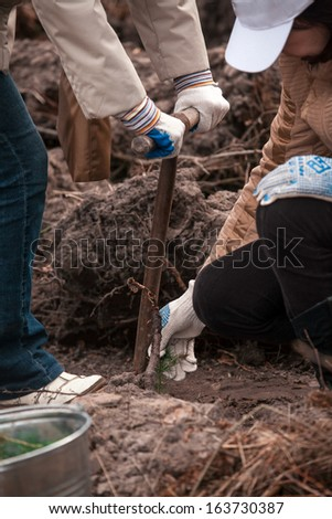 Two women planting small tree sprout in bed