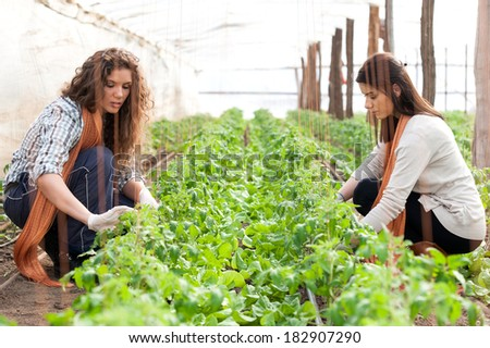 Two women workers planting on green crop - stock photo
