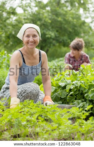 Two women working in her vegetable garden - stock photo
