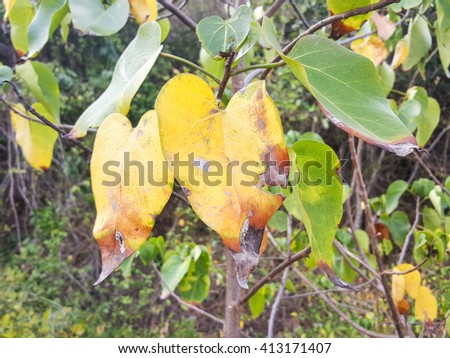 two yellow leaves plant