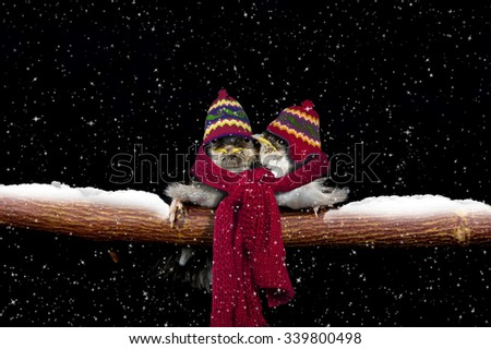 Two young birds keeping each other warm in the snow - stock photo