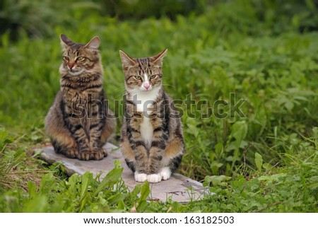 Two young cats in a garden