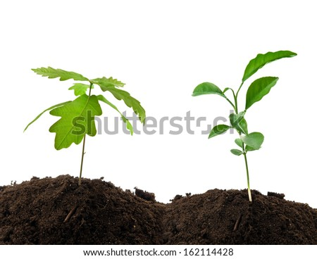 two young green plants growing from soil
