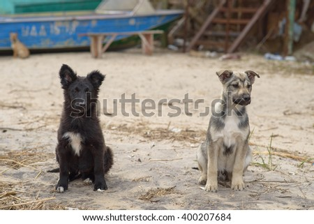 two young homeless dogs on a beach - stock photo