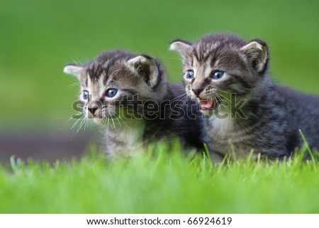 two young kitten on a meadow