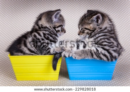 Two young kittens looking at each other while in trays on polka dot background - stock photo