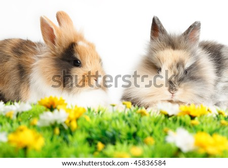 Two young rabbits with grass isolated on white background - stock photo