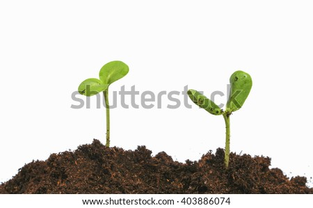Two young sprouts in black earth - stock photo