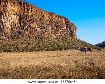 Two zebras stand in background of the canyon - stock photo