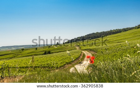 Typical agricultural summer  landscape in Champagne, France - stock photo