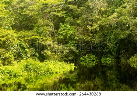 Typical Amazonian vegetation in Ecuadorian primary jungle - stock photo