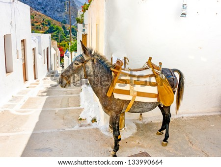 Typical beautiful narrow road with a mule in Langada a village of Amorgos island in Greece - stock photo