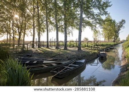 typical boats moored at the marsh of Fucecchio, Tuscany, Italy - stock photo