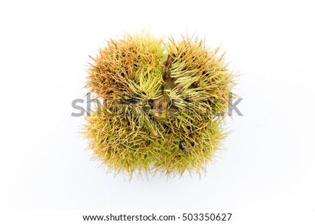 Typical chestnuts autumn season