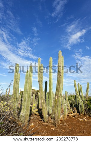 Quot Column Cactus Quot Stock Images Royalty Free Images