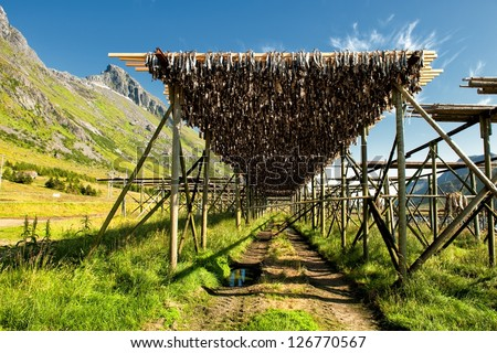 Typical drying flake for Stockfish in Lofoten, Northern Norway. Drying food is the world's oldest preservation method and stockfish has traditions that date back back to the vikings.