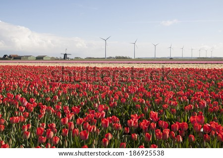 Typical Dutch spring picture with windmill and beautiful tulips in spring. - stock photo