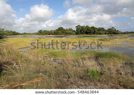 Typical Everglades marsh natural area, home to hundreds of plant and animal species.