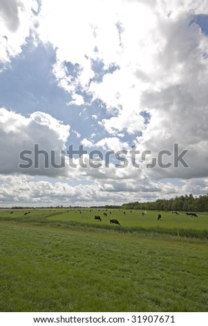typical farmland landscape of the Netherlands
