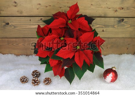 Typical for Christmas and Holidays Season Symbols. Flower Poinsettia, Decorative Red Ball with painted tree and flakes, Pine Cones over white snow in front of gray wooden wall.