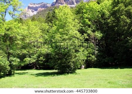 Typical forest of beech tree and fir tree in the Pyrenees in Spain. - stock photo