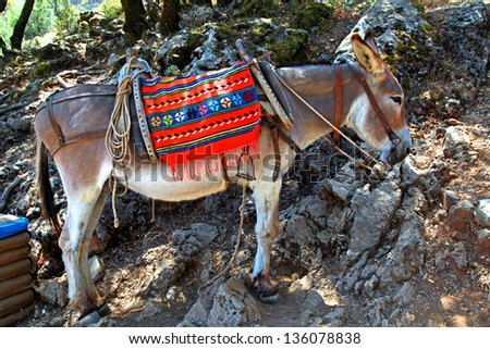 typical greek donkey with multicolor saddle standing in the mountains, Crete island, Greece. Donkeys are used for transportation on the island of Greece where cars are not allowed. - stock photo
