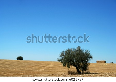 typical landscape from alentejo portugal - stock photo