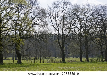 Typical landscape of the Achterhoek in the Netherlands - stock photo
