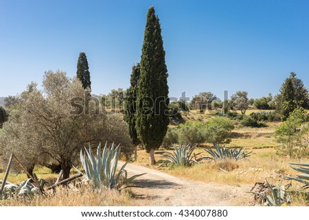 Typical landscape with pine trees and olive groves in south-central Crete near the villages Pitsidia and Matala. The beautiful landscape invites to hike. The way leads to the village Matala - stock photo