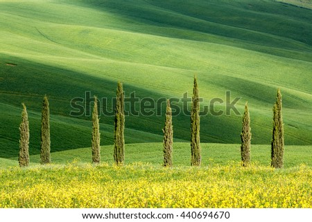 Typical shapes of cypress trees in Tuscany, Italy - stock photo