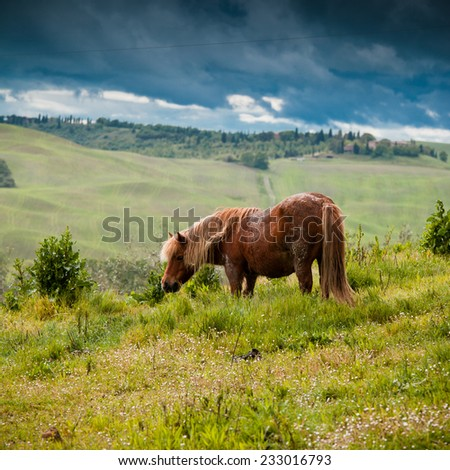 Typical Tuscan landscape in Italy with horse