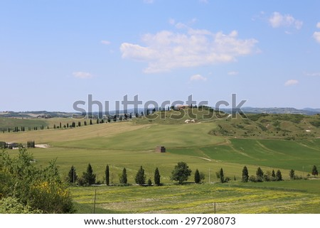 Typical Tuscan rural scene. Gently rolling hills covered in arable crops and Poplar Trees lining  tracks to hilltop farms. An idyllic landscape of Italian countryside.