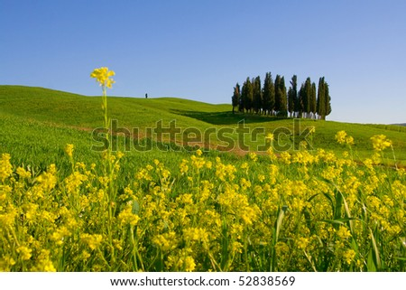 Typical Tuscany (Val d' Orcia) landscape with blue sky, rolled hills and cypress. - stock photo