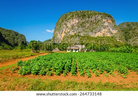 Typical view of Valle de Vinales with farm and mogotes in Cuba  - stock photo