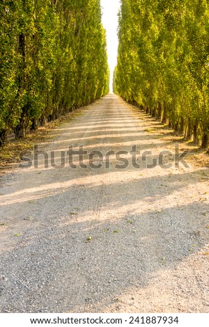 typically italian road  - stock photo