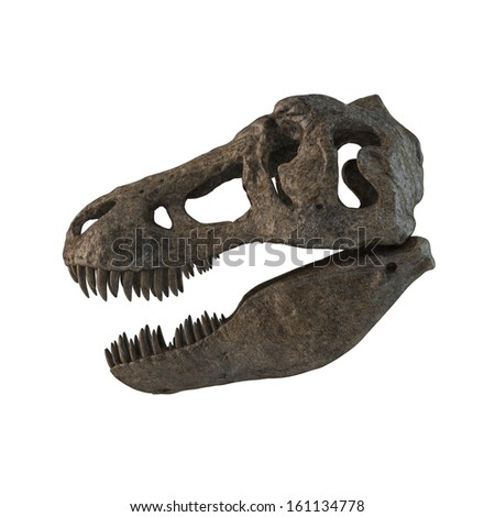 Tyrannosaurus Skull isolated. Left - stock photo