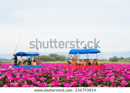 Udonthani THAILAND-December 5 : Unseen pink water lily festival in Udonthani. On December 5, 2014 in Udonthai ,Thailand - stock photo