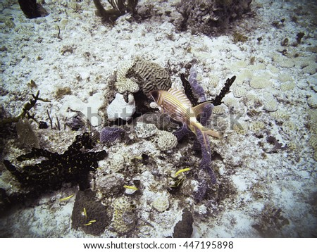 Ugly red fish swimming in a reef - stock photo