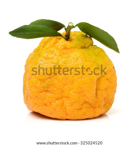 ugly tangerine on a white background  - stock photo
