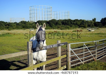 UK gas holders in the countryside on bright sunny day include horse