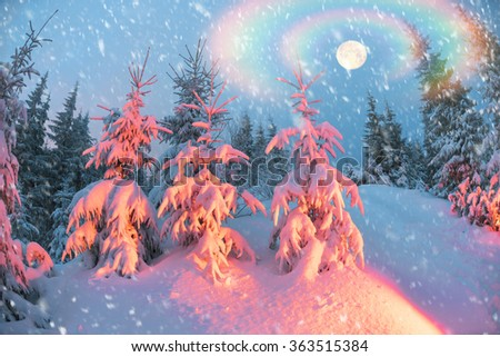 Ukraine, Carpathians strong snowstorm covered the mountains of sugar crust, like frosting. The gentle radiance glow of sunrise in a landscape decorated with a picture of harsh wilderness - stock photo