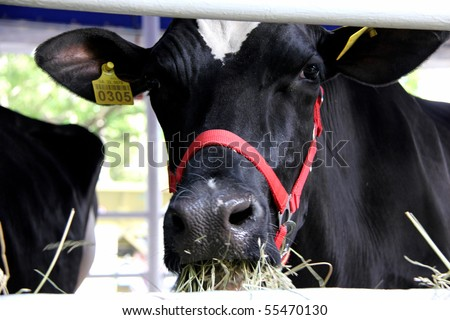 "UKRAINE, KIEV - JUNE 16: XXII International agro-industrial exhibition ""AGRO 2010"". June 16, 2010 in Kiev, Ukraine. - stock photo"