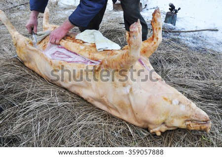 Ukraine Orthodox Church Christmas Tradition to Kill Pig. Farmers Pig Slaughter as Result of a Seasonal Country Folk Tradition  - stock photo