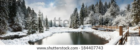 Ukraine, winter forest in the Carpathian Mountains, pine trees covered with snow, the resort area in the district Mezhgorye lake Vita