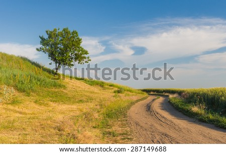 Ukrainian rural landscape with lonely apricot tree on a hill and country road - stock photo