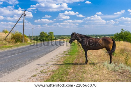 Ukrainian summer landscape with horse waiting for the bus at the roadside - stock photo