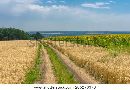 Ukrainian summer landscape with wheat field and country road - stock photo